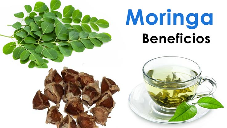 Beneficios de la Moringa