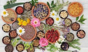 10 Hierbas medicinales fácil de conseguir