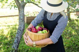 mujer cosechando manzanas