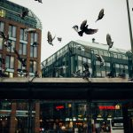 Beneficios de las palomas en las ciudades