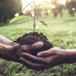 Beneficios de combatir la deforestación