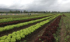 Beneficios de la agricultura sostenible
