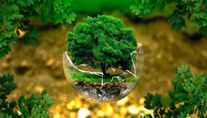 Contribuyes con el medio ambiente al comprar piezas de segunda mano