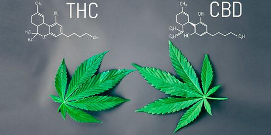 cannabis para tratar enfermedades